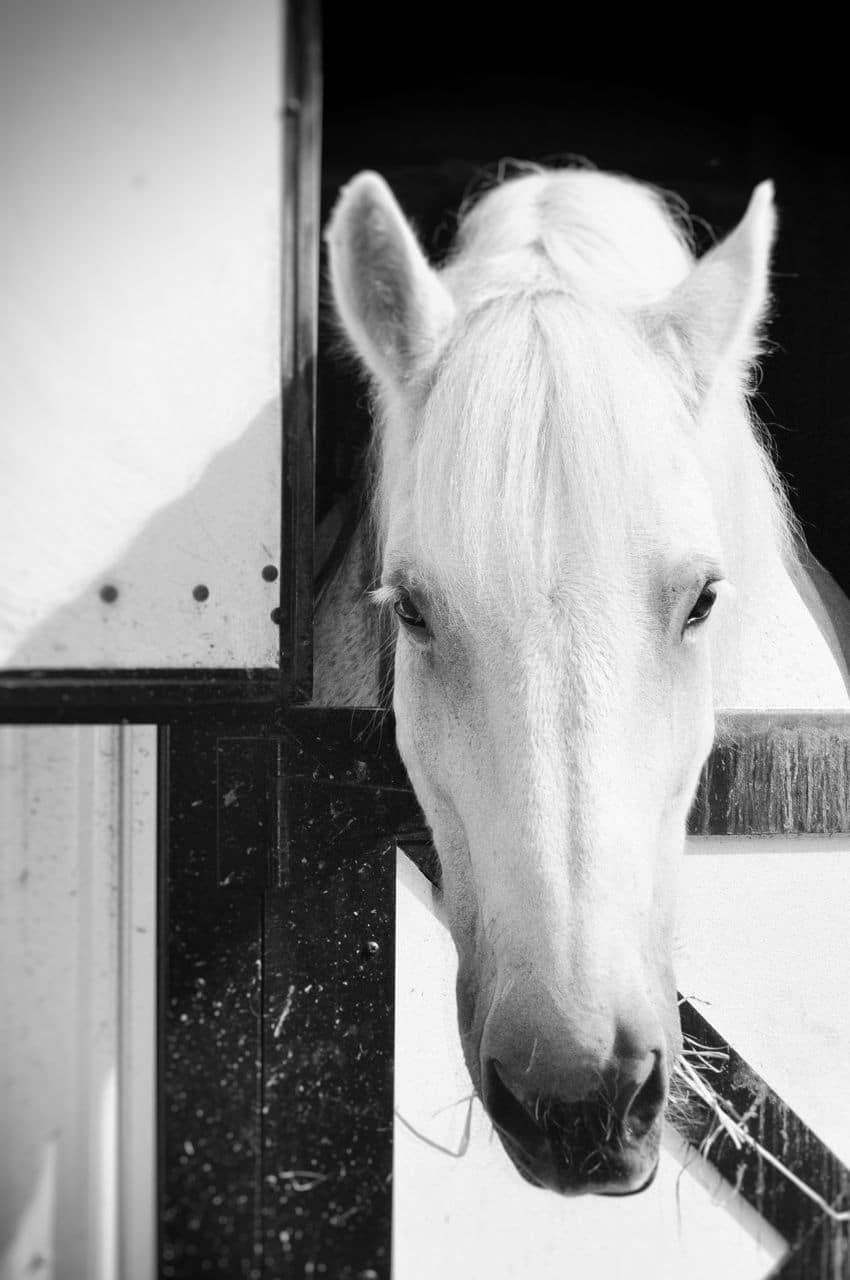 A Horse Farm – Chastain Park Conservancy, GA