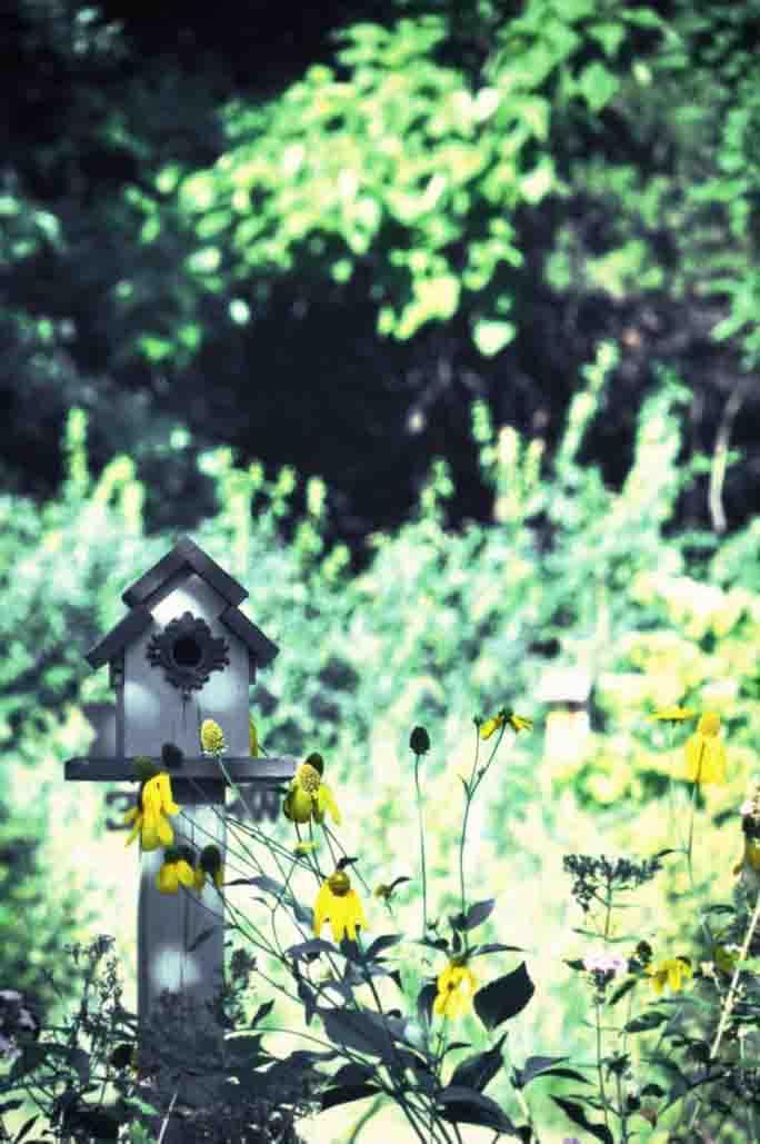 Enchanted Garden Upstate New York