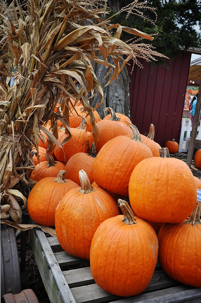 Fall Festival at Cox Farms