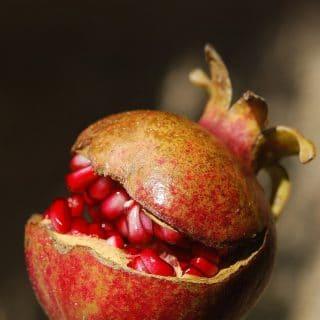 Food Fact Friday – Pomegranate