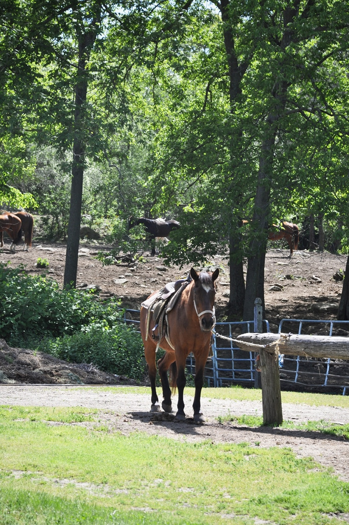 Horseback Riding in Rhode Island