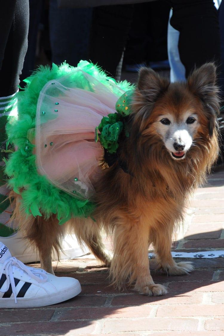 Saint-Patrick-Day